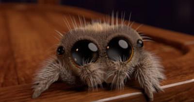 araña tierna