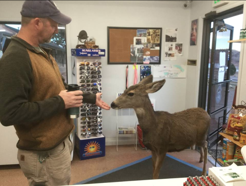 Deer store colorado
